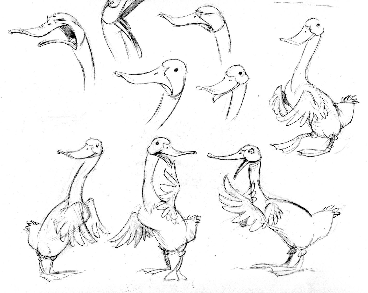 duck.modelA
